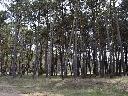 Terreno Cul De Sac Estribor - Alamos Ii - Pinamar Norte Pinamar